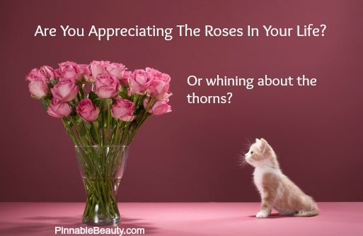 appreciation kitten roses meme