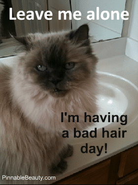Bad Hair Day Cat Meme